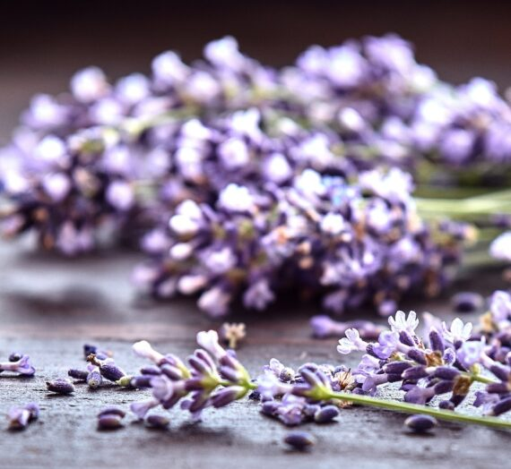 Best 5 Lavender Essential Oil: Benefits, Types + How to Use